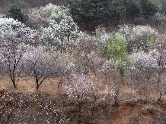Chengde Qingchui Mountain (Hammer Rock): Flowers in bloom taken during the cable ride.