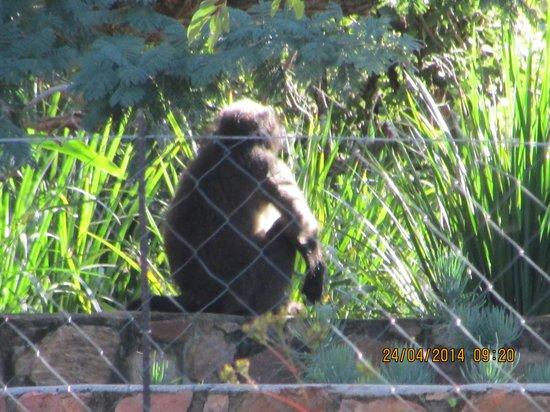 Shondoro Mountain Retreat: Vandermerwe