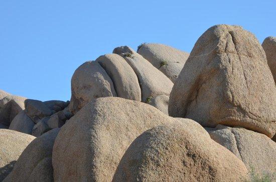 Joshua Tree National Park: Gorilla or Mummy?
