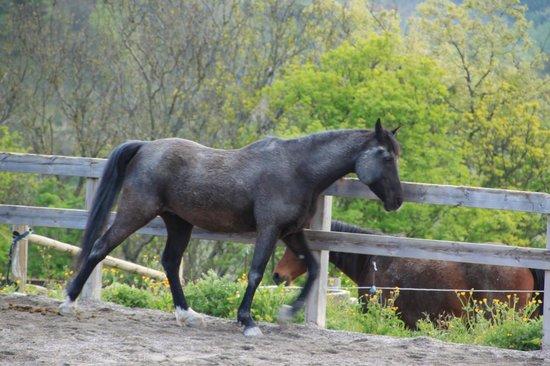 Agriturismo Ca' Maddalena : uno dei cavalli del maneggio