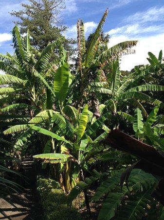 Jardín Botánico: Palme un po' trascurate.