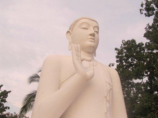 Elephant Freedom Project: Buddha Temples..