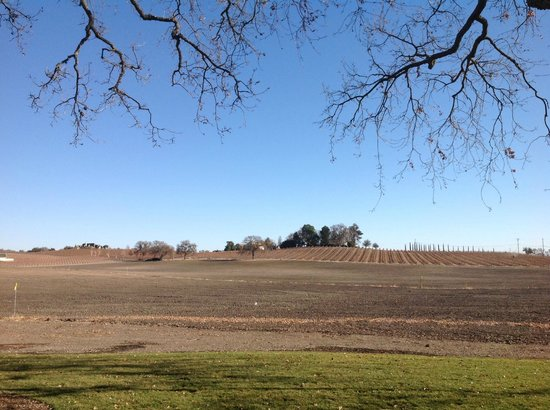 Summerwood Winery & Inn : View from Room in January