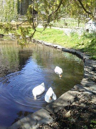 Grove Museum of Victorian Life: Ducks enjoying the day.