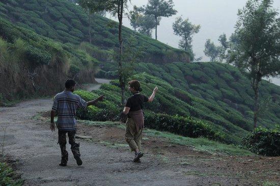 Green Magic Home : dans les plantations de thé