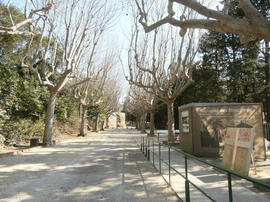 Les Alyscamps : viale d'ingresso