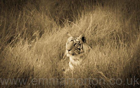 Tiger's Den Resort: tala female