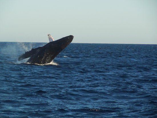 Cabo Sailing Ocean Adventures: Up close and personal!