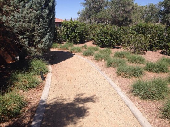 The Westin Lake Las Vegas Resort & Spa: Walkway by gardens