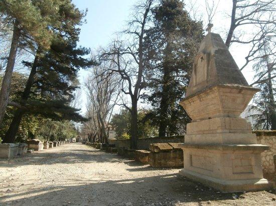 Les Alyscamps : viale delle tombe