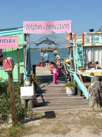 Dolphin Connection Texas: 4
