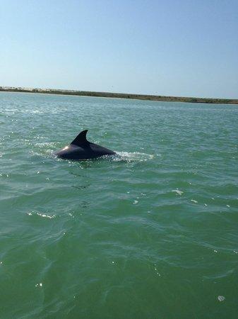 Dolphin Connection Texas: 1
