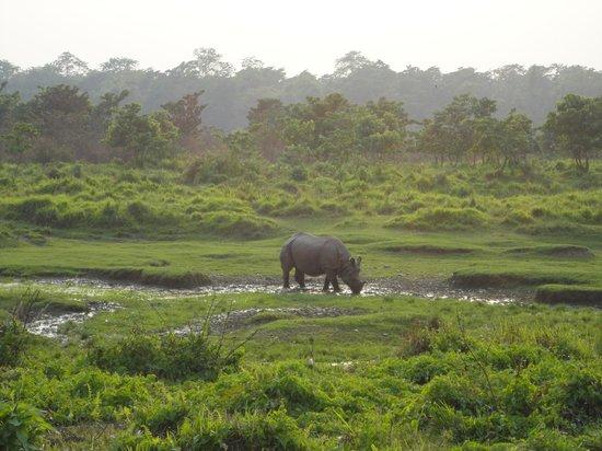 Rhino Lodge and Hotel: Evening walk -RHINO!