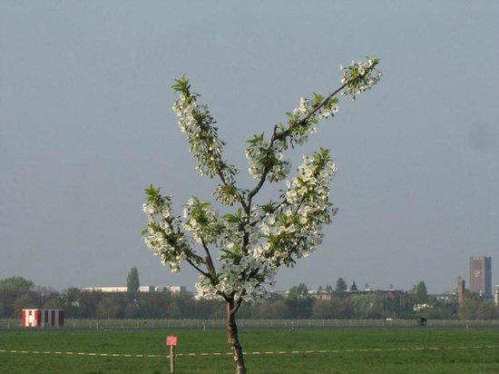 Flughafen Tempelhof: Spring is here
