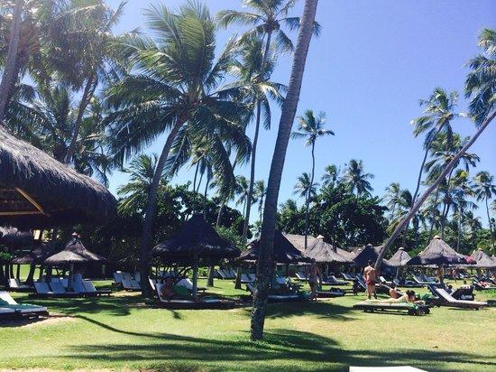 Tivoli Ecoresort Praia do Forte: Olha o céu azul com este montão de verde!!!! Lindo!!!!!!