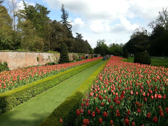 National Trust Cliveden: The tulips in the Long Garden