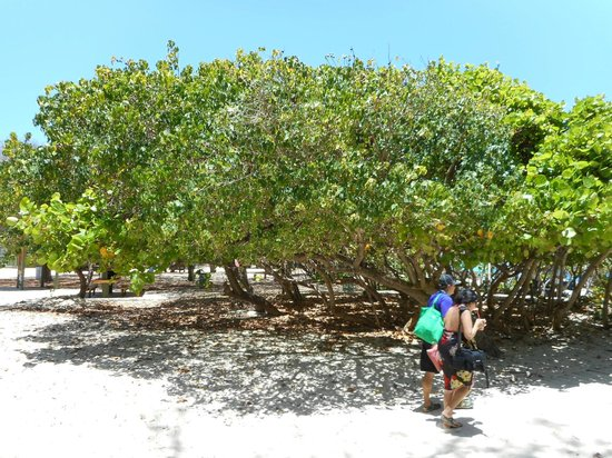 Culebrita Island: Flamingo beach on I the island of Culebra