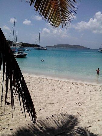 Culebrita Island: Tortuga beach culebrit Puerto Rico