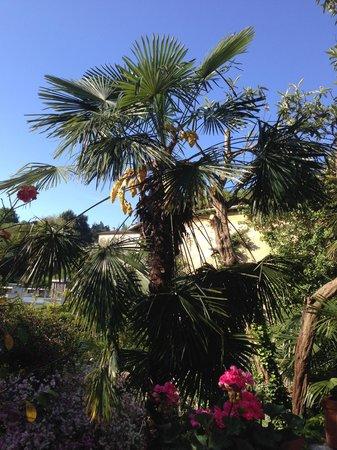 B&B Villa Adelaide: Garden