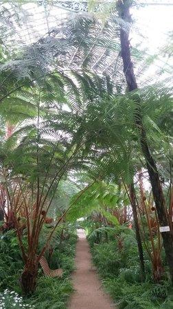 Serres Royales De Laeken: Palm Trees Section