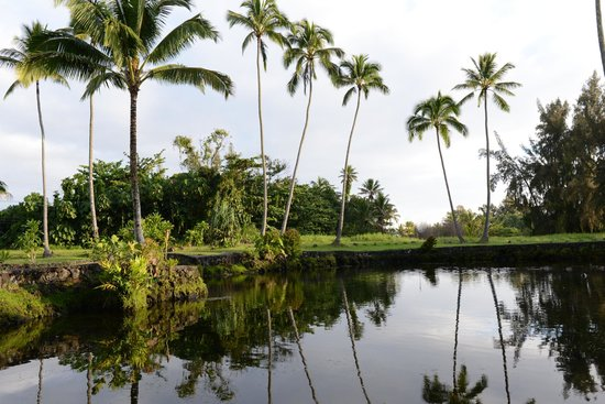 Hale Lamalama Ka'ili: View across the pond