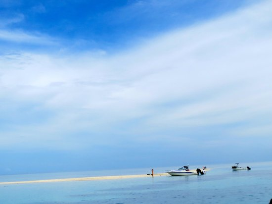 Coral Cats - Day Trips : Sand Bar