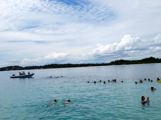 Coral Cats - Day Trips : Group snorkel