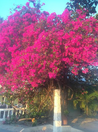 Sandals Grande Antigua Resort & Spa : My favorite tree