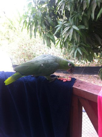 Principe del Pacifico : Silvio, our balcony visitor