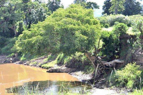 Amani Mara Camp: At Mara river