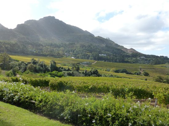 Constantia Glen Winery : View from lunch