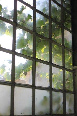 Why Not? Tbilisi Legend Hostel: Вид из окна хостела, утренний виноград