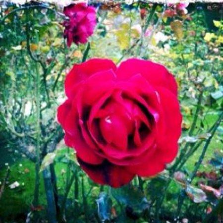 Musée Rodin : Flower from the beautiful garden