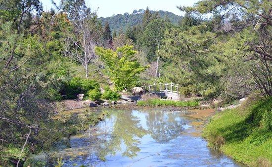 Quarryhill Botanical Garden: Lovely pond in Quarry Hill Garden