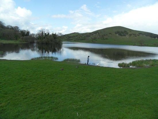 Lough Gur Visitor Centre: Even the ducks are friendly