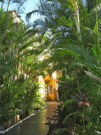 Hotel les Bougainvilliers : le jardin