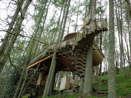 8 Living Room Tree Houses Powys Of The Treehouse Itself Picture Of Living Room Treehouses