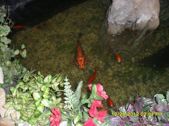 Rosengarten: acquario pesci