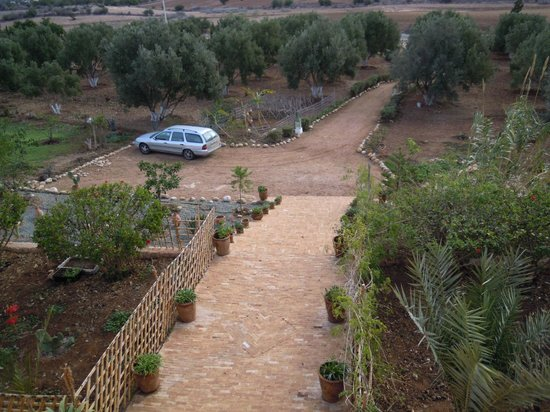 Riad Douar Des Oliviers : Olive Grove