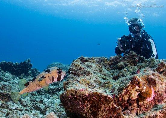 Andys Scuba Diving Phuket : Andy