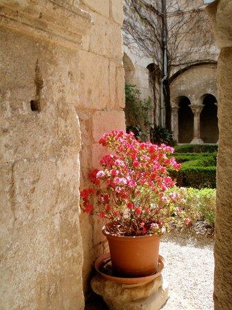 Provence Exclusive Tours : Cloister garden of the Ancien Monastere de St-Paul-de Mausole
