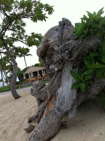 Four Seasons Resort Hualalai: Pool restaurant seen from beach