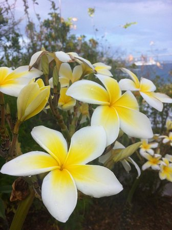 Virgin Islands Campground : More flowers