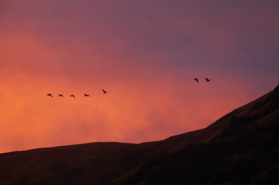 Canyon Outfitters, Inc.: Birds in flight - early morning light.