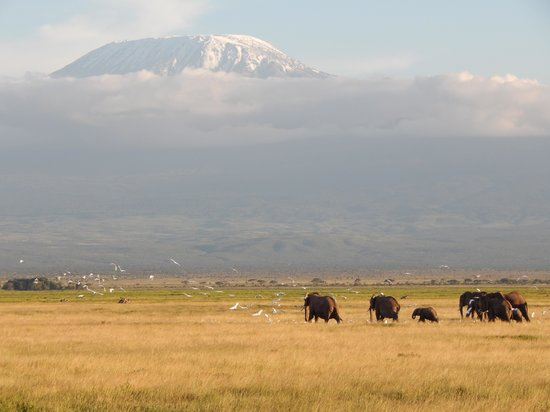 Amboseli National Park: Elephants and Kilimanjaro