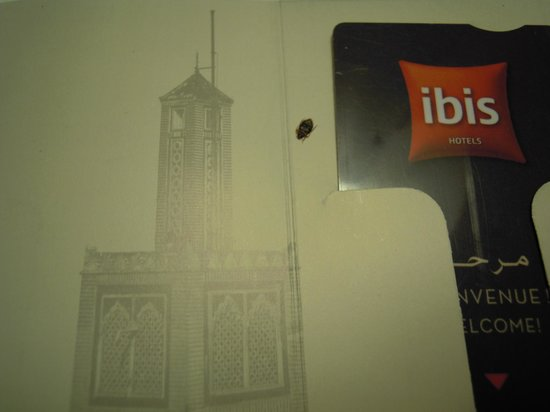 Ibis El Jadida : Bed Bug 2