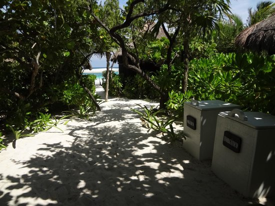 Coco Tulum: path to the beach