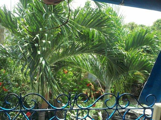 Holguin Province, Cuba: view