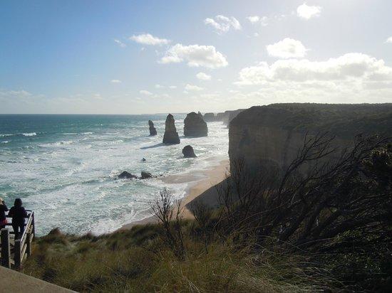 Wildlife Tours Australia: Great ocean road