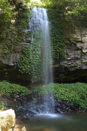 Parque Nacional de Dorrigo: Crystal Shower Falls